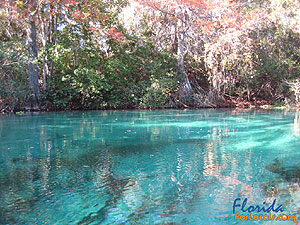 Weeki Wachee Springs Offers Beautiful Views