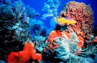 coral-reef-protection