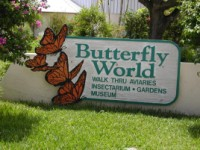 butterfly-world-florida-1