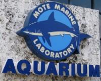 mote-aquarium
