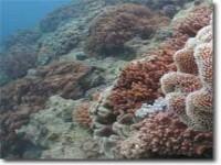 reef-1
