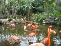 flamingo-gardens